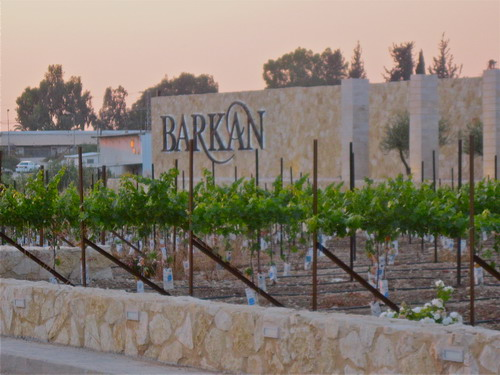 how-to-drink-red-wine-barkan-wine-1